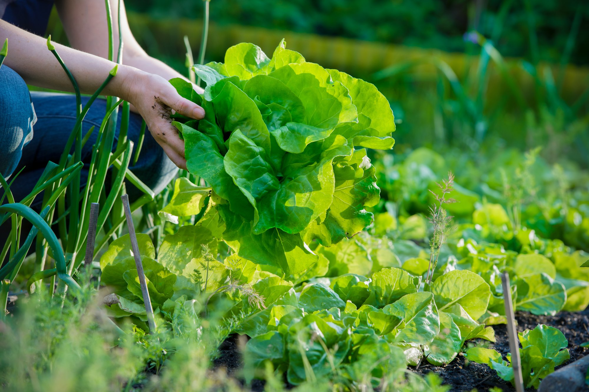 The Ultimate Guide to Starting a Community Garden